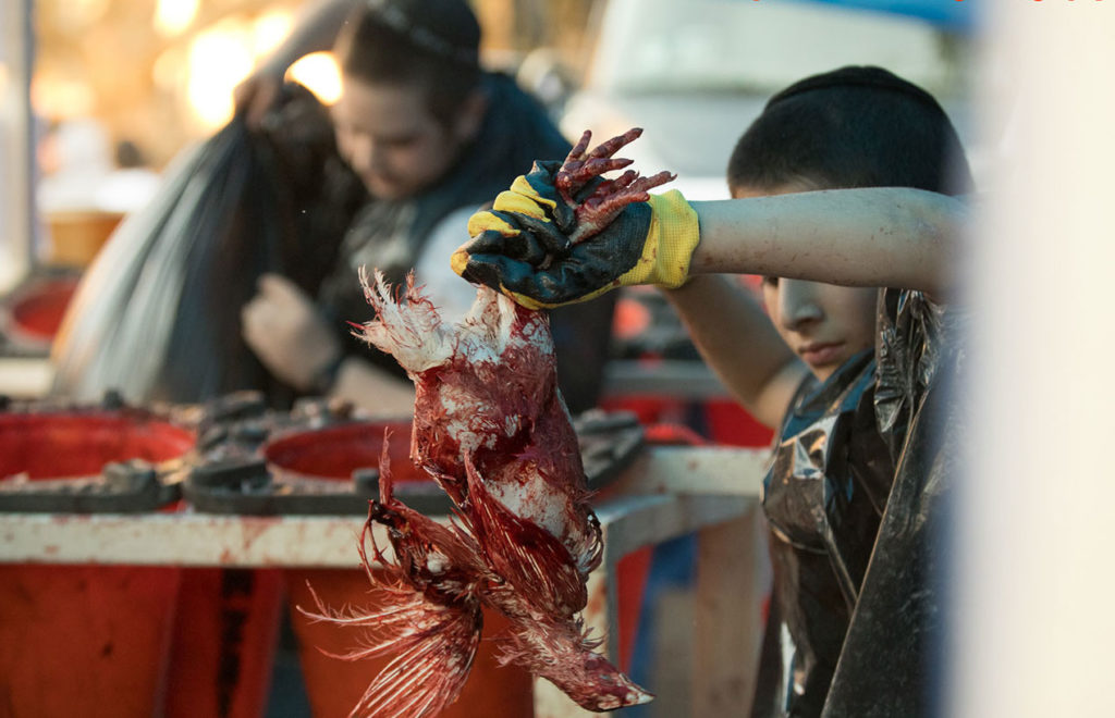 Child holding a chicken covered in blood